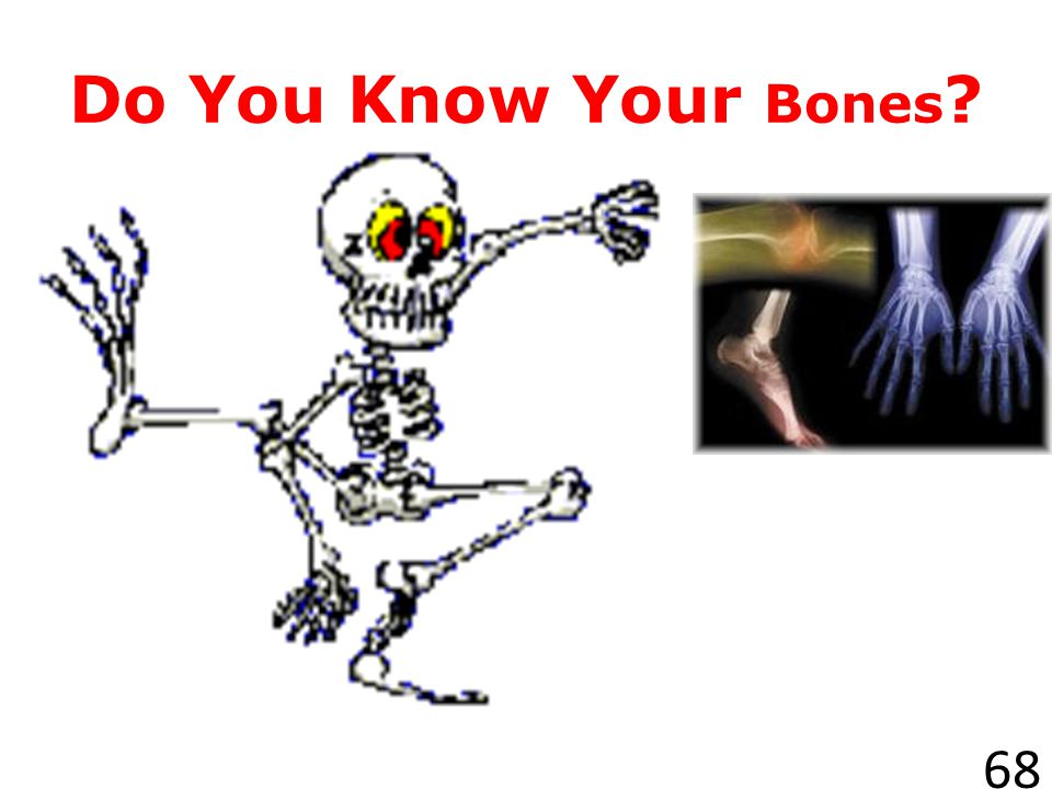 Do You Know Your Bones