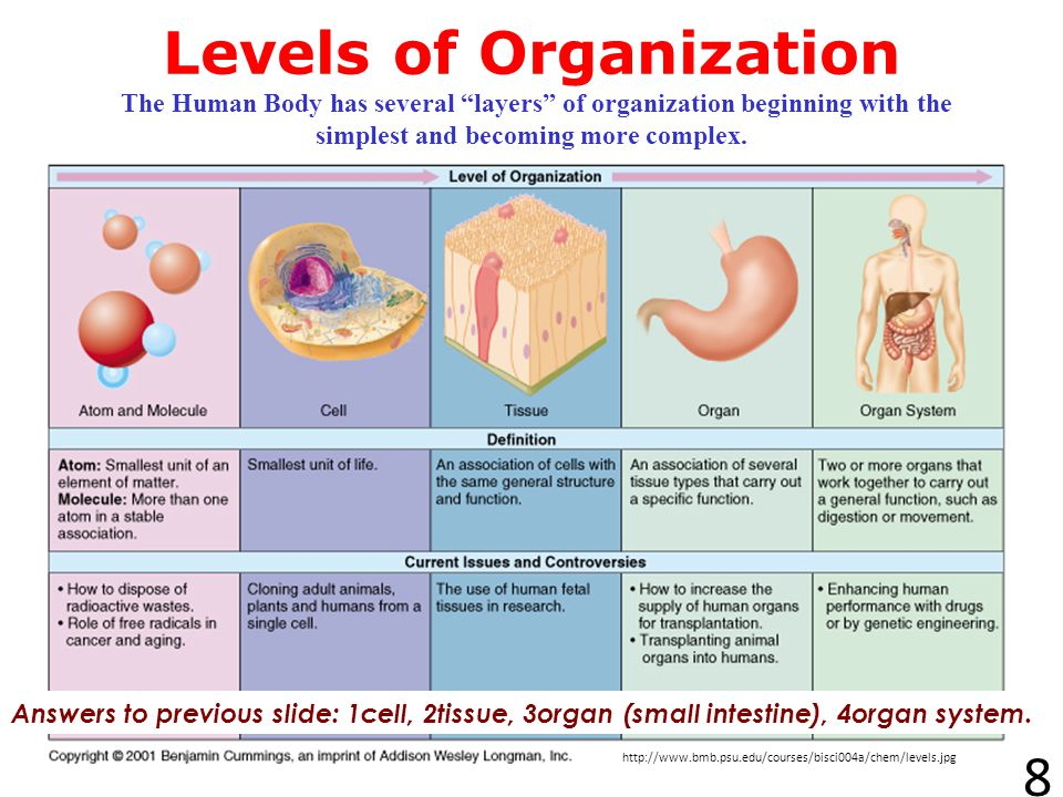 Levels of Organization The Human Body has several layers of organization beginning with the simplest and becoming more complex.