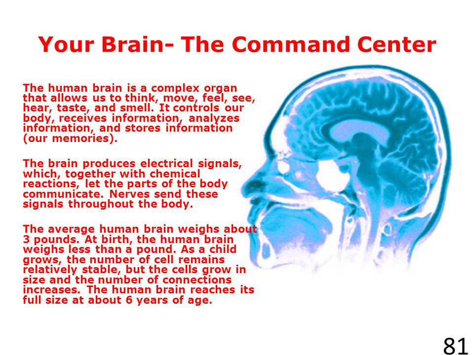 Your Brain- The Command Center