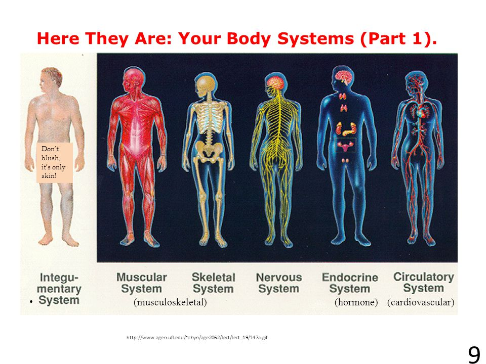 Here They Are: Your Body Systems (Part 1).
