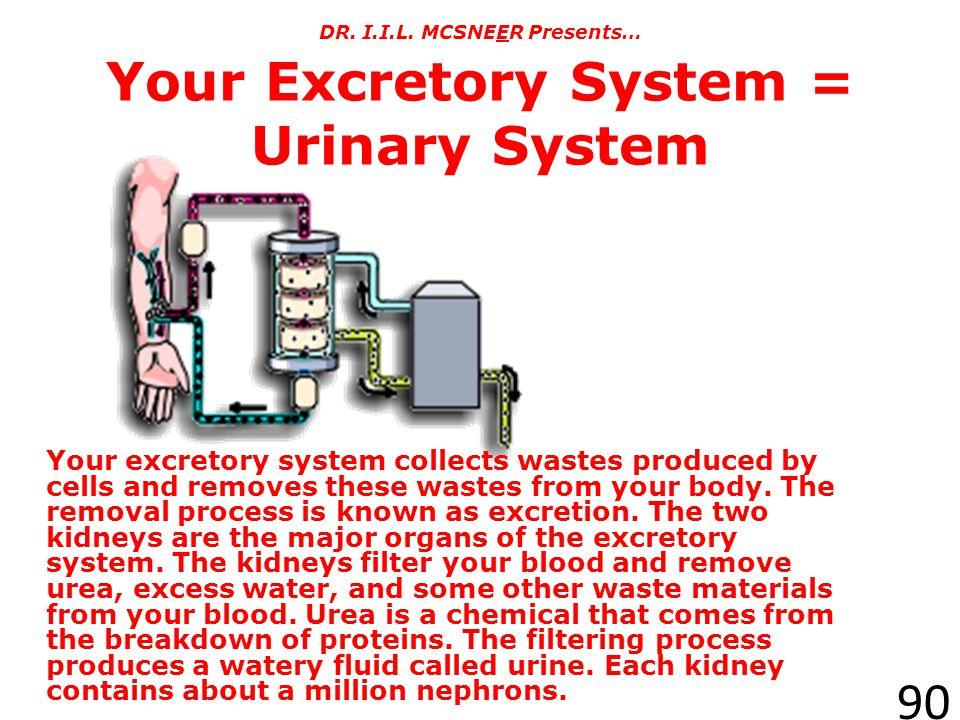 DR. I.I.L. MCSNEER Presents… Your Excretory System = Urinary System