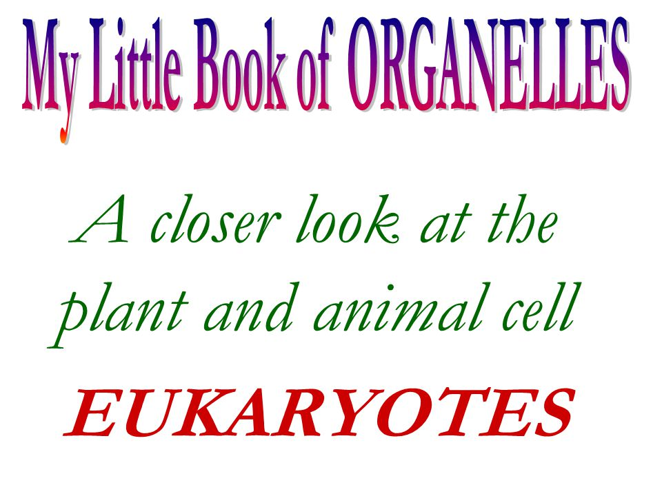 A closer look at the plant and animal cell EUKARYOTES
