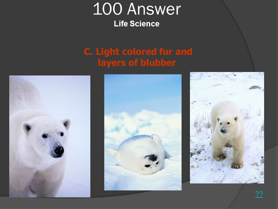 100 Answer Life Science C. Light colored fur and layers of blubber