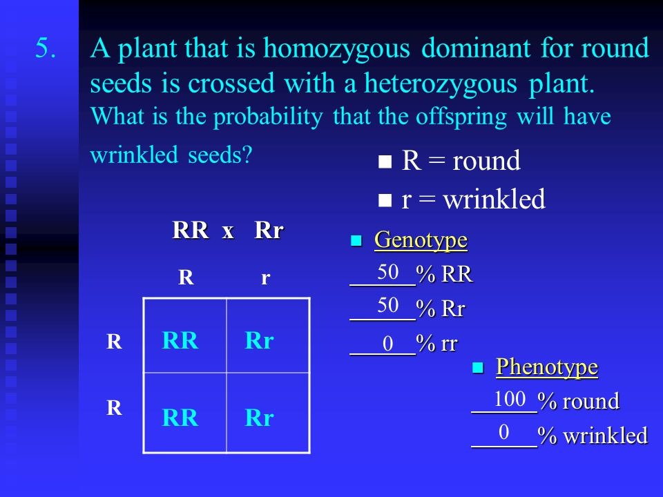 A plant that is homozygous dominant for round seeds is crossed with a heterozygous plant. What is the probability that the offspring will have wrinkled seeds