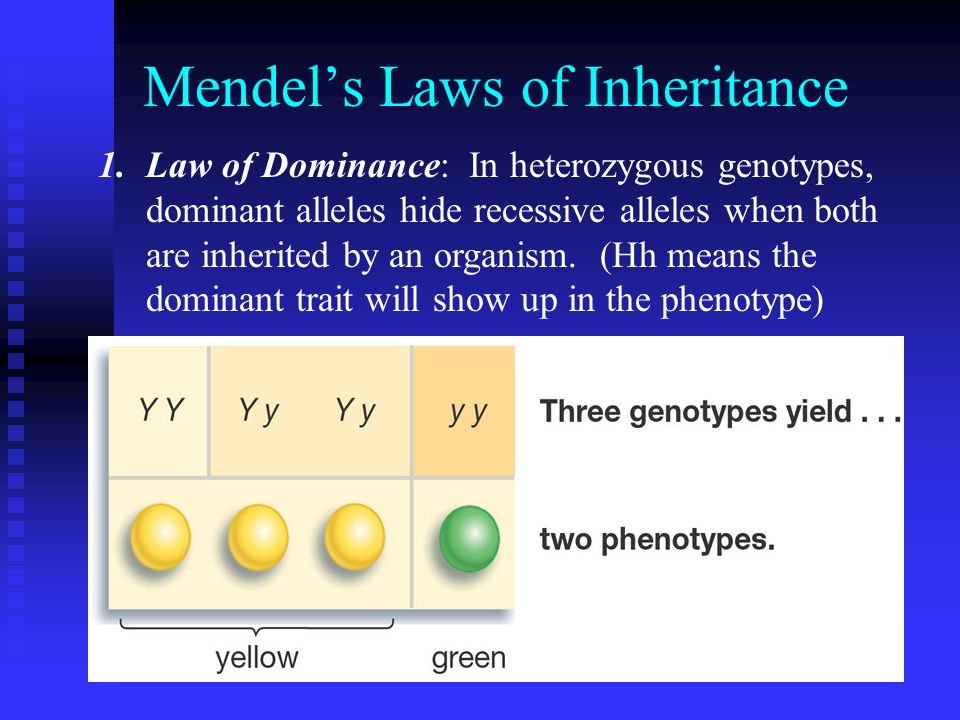 Mendel's Laws of Inheritance