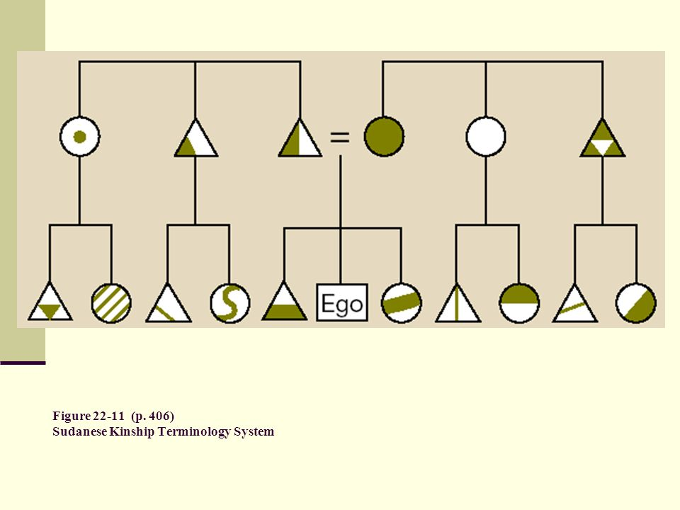 Figure 22-11 (p. 406) Sudanese Kinship Terminology System