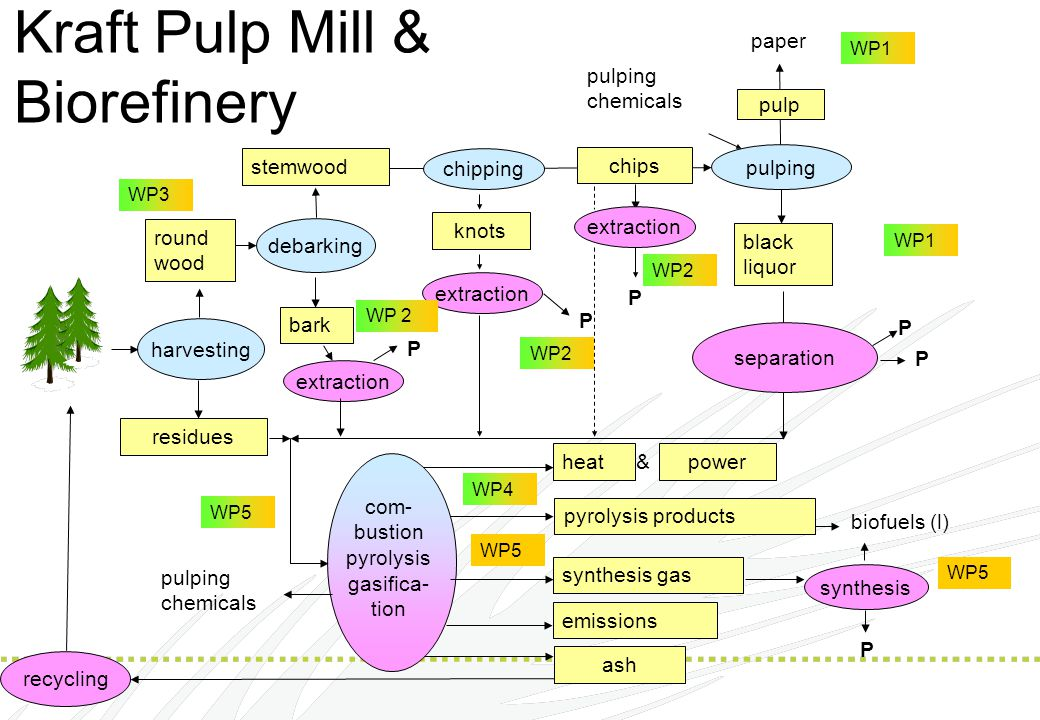 Kraft Pulp Mill & Biorefinery