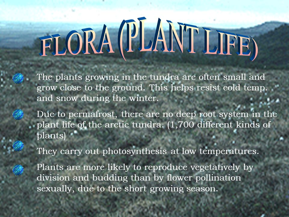 FLORA (PLANT LIFE)