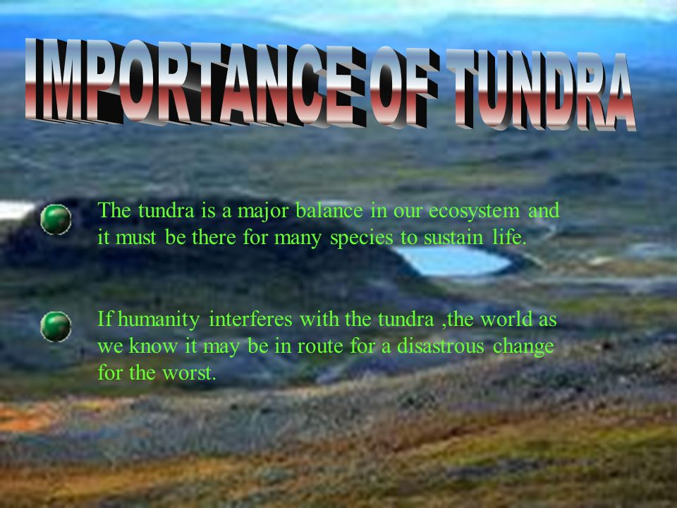 IMPORTANCE OF TUNDRA The tundra is a major balance in our ecosystem and it must be there for many species to sustain life.