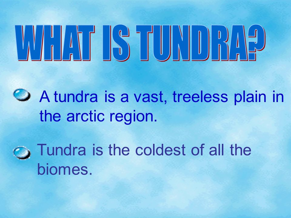 A tundra is a vast, treeless plain in the arctic region.