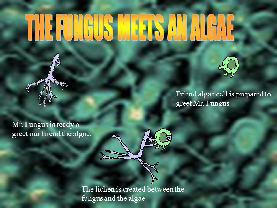 THE FUNGUS MEETS AN ALGAE