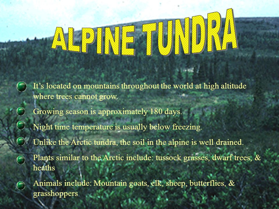 ALPINE TUNDRA It's located on mountains throughout the world at high altitude where trees cannot grow.