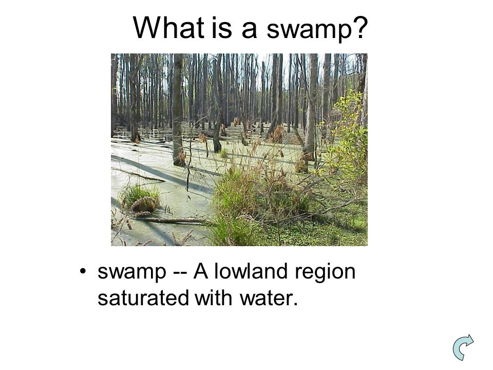 What is a swamp swamp -- A lowland region saturated with water.