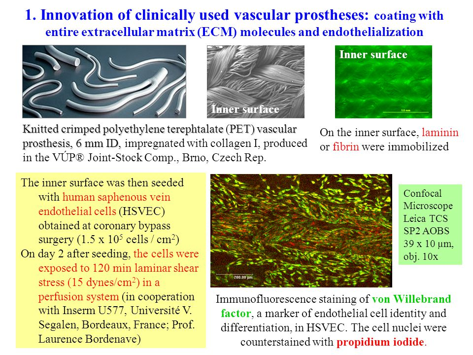1. Innovation of clinically used vascular prostheses: coating with entire extracellular matrix (ECM) molecules and endothelialization