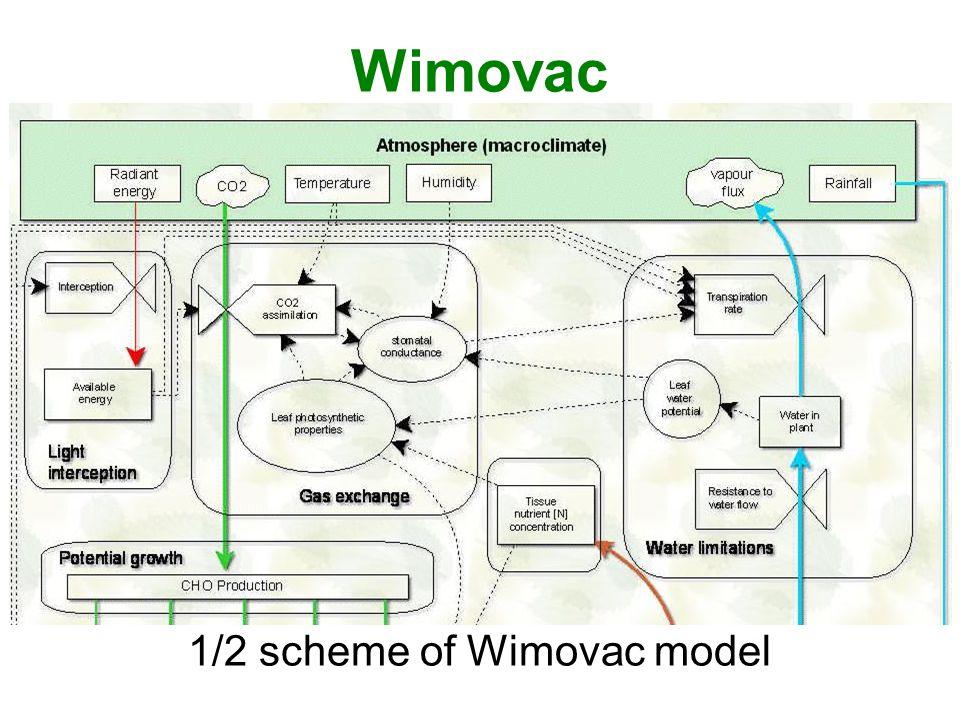 1/2 scheme of Wimovac model