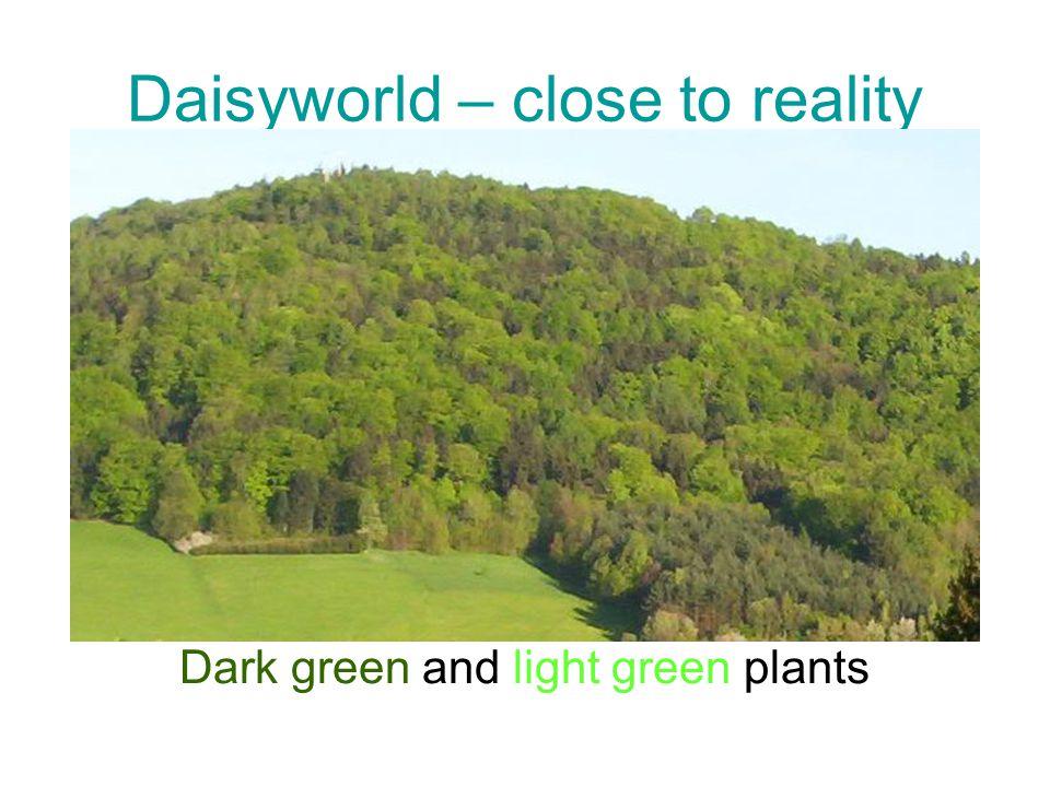 Daisyworld – close to reality