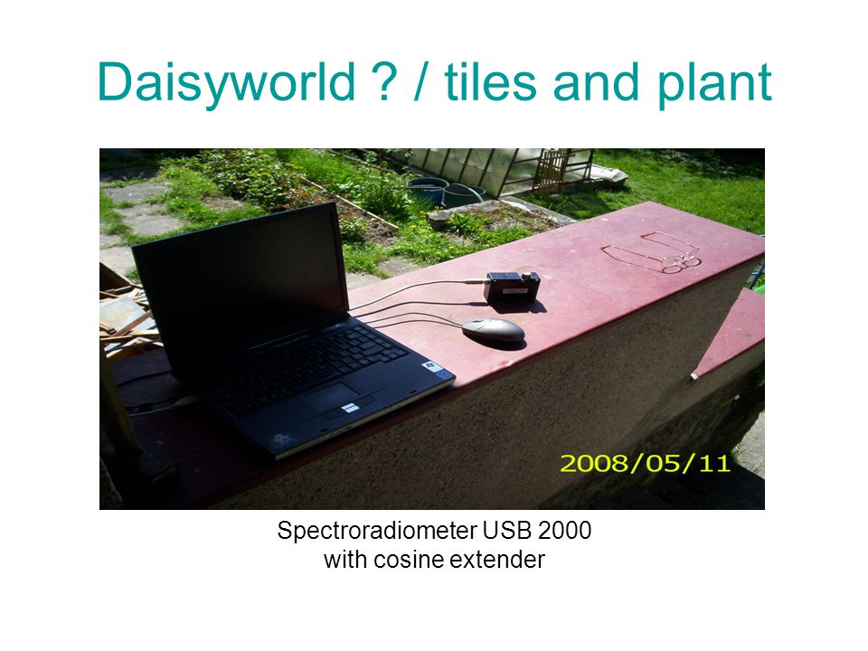 Daisyworld / tiles and plant