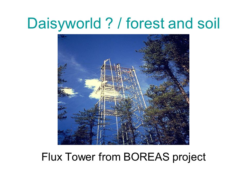 Daisyworld / forest and soil