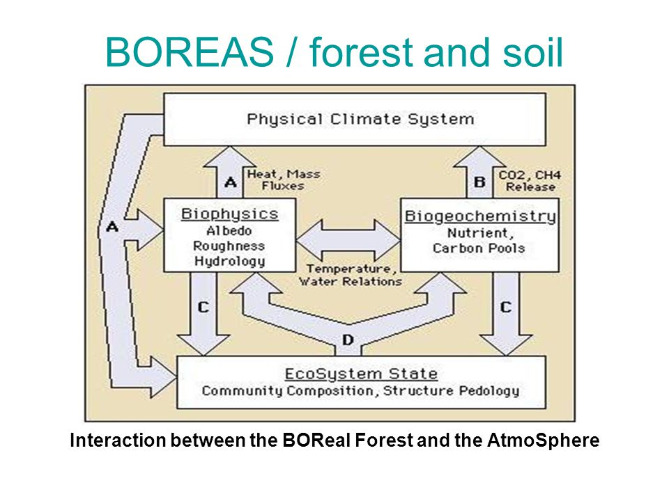 BOREAS / forest and soil