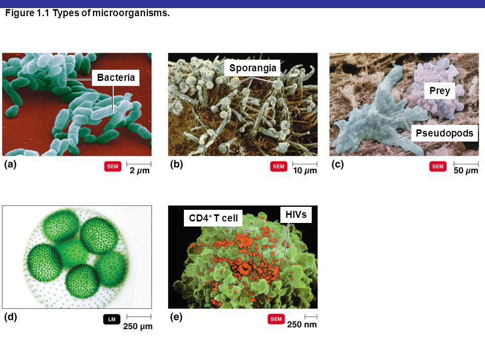 Figure 1.1 Types of microorganisms.