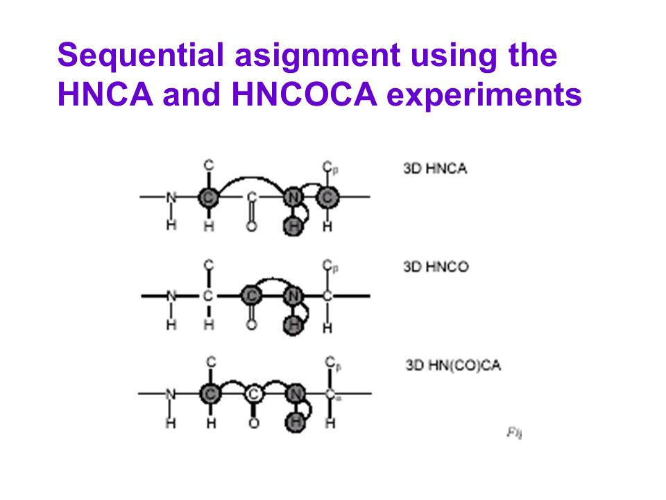 Sequential asignment using the HNCA and HNCOCA experiments