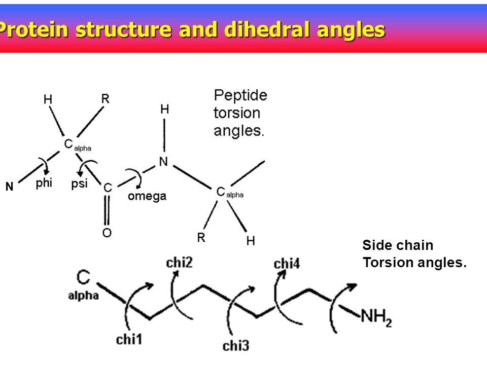 Protein structure and dihedral angles