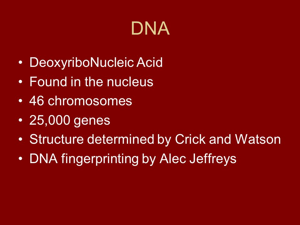 DNA DeoxyriboNucleic Acid Found in the nucleus 46 chromosomes