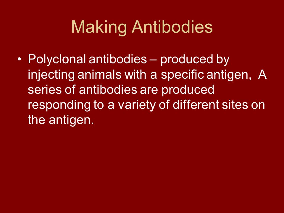 Making Antibodies