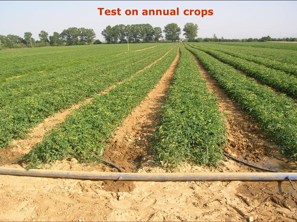 Test on annual crops