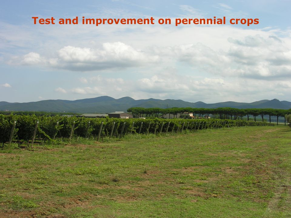 Test and improvement on perennial crops