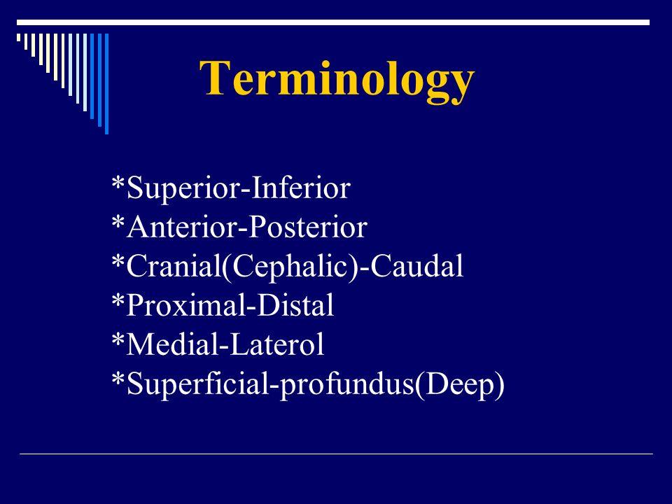 Terminology. Superior-Inferior. Anterior-Posterior