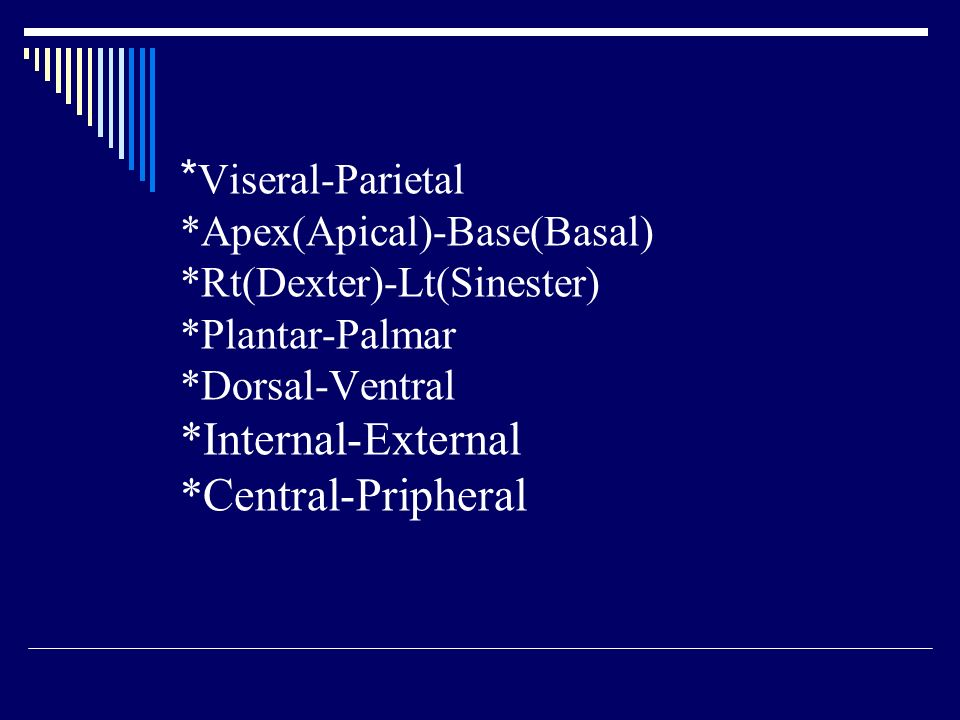 Viseral-Parietal. Apex(Apical)-Base(Basal). Rt(Dexter)-Lt(Sinester)