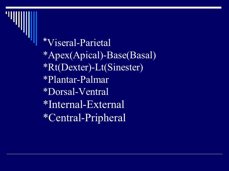 Viseral-Parietal. Apex(Apical)-Base(Basal). Rt(Dexter)-Lt(Sinester)