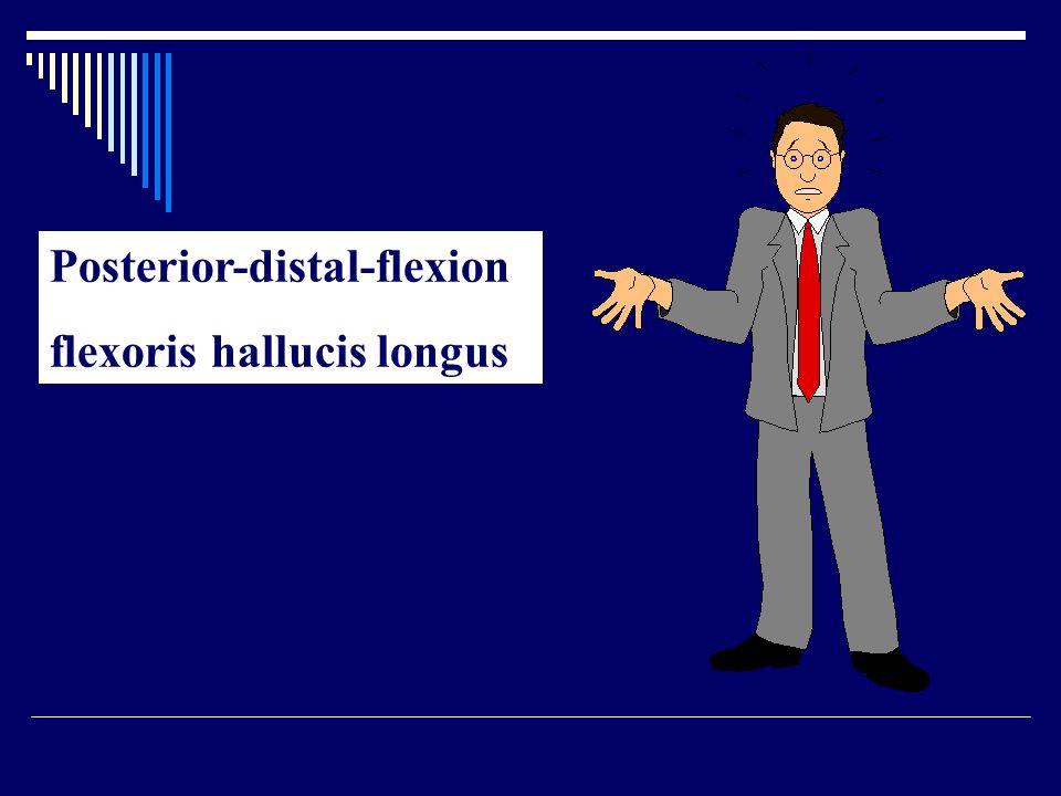 Posterior-distal-flexion