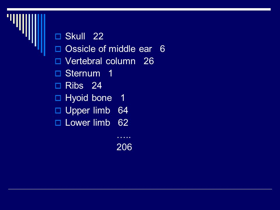 Skull 22 Ossicle of middle ear 6. Vertebral column 26. Sternum 1. Ribs 24. Hyoid bone 1.