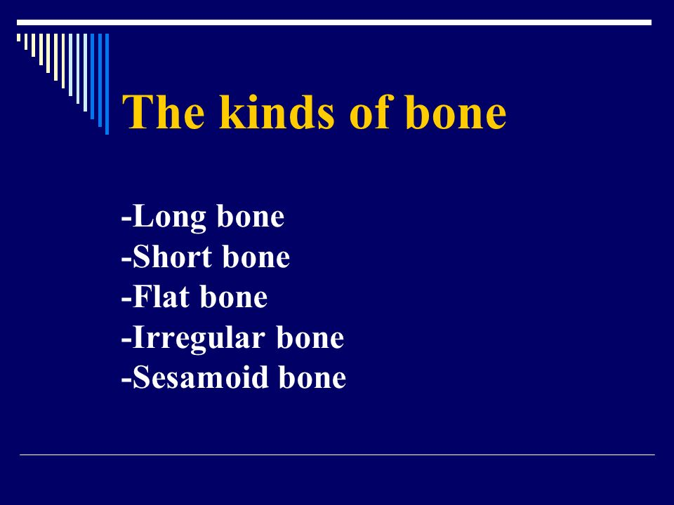 The kinds of bone -Long bone -Short bone -Flat bone -Irregular bone -Sesamoid bone