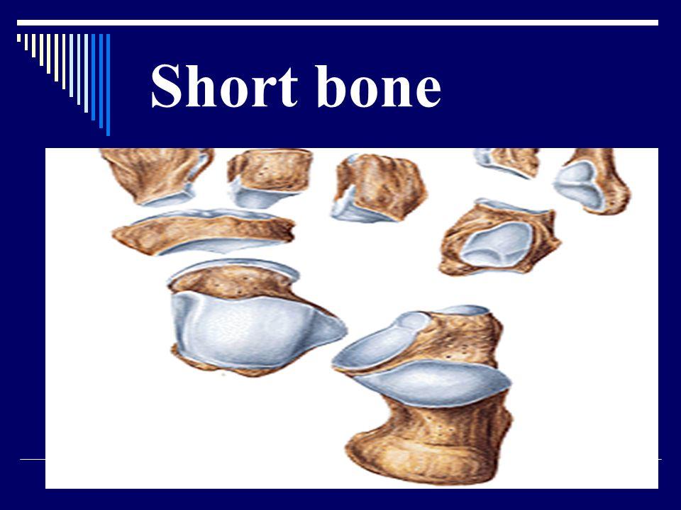Short bone