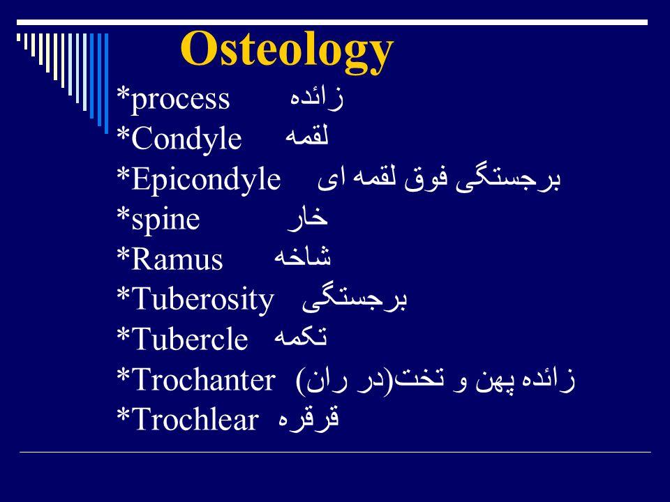 Osteology. process زائده. Condyle لقمه. Epicondyle برجستگی فوق لقمه ای