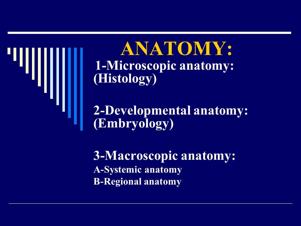 ANATOMY: 2-Developmental anatomy: (Embryology) 3-Macroscopic anatomy: