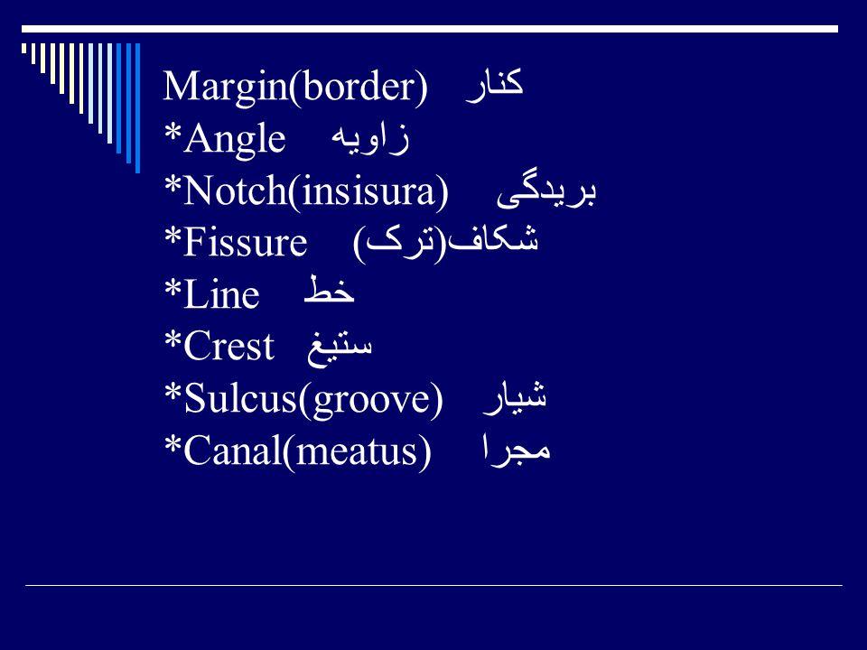 Margin(border) کنار. Angle زاویه. Notch(insisura) بریدگی