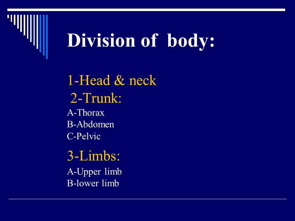 Division of body: 1-Head & neck 2-Trunk: A-Thorax B-Abdomen C-Pelvic 3-Limbs: A-Upper limb B-lower limb