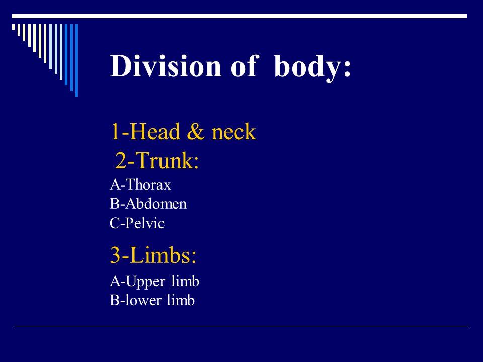 Division of body: 1-Head & neck 2-Trunk: A-Thorax B-Abdomen C-Pelvic 3-Limbs: A-Upper limb B-lower limb