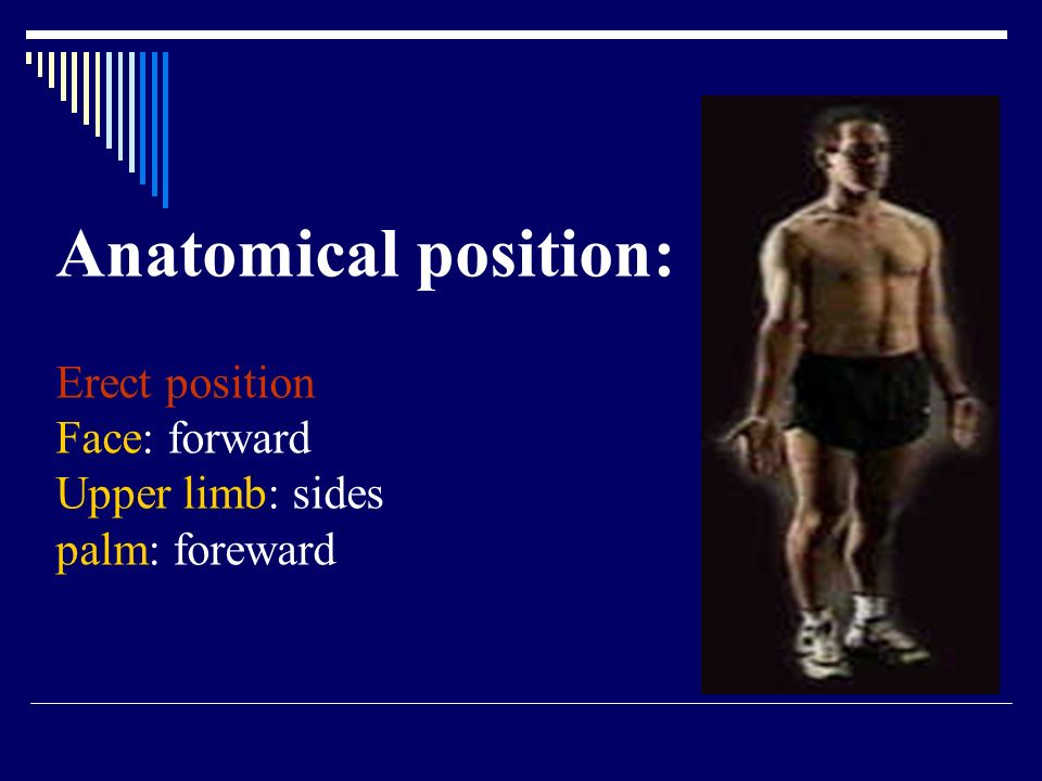 Anatomical position: Erect position Face: forward Upper limb: sides palm: foreward