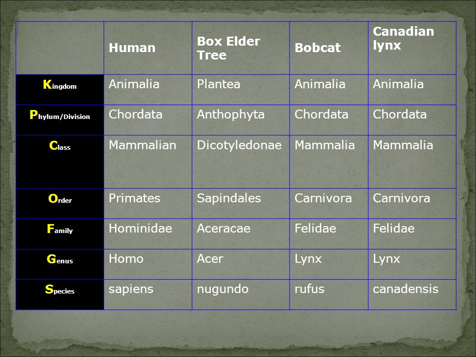 Kingdom Phylum/Division Class Order Family Genus Species