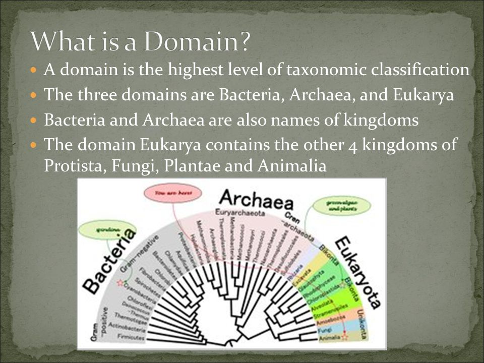 What is a Domain A domain is the highest level of taxonomic classification. The three domains are Bacteria, Archaea, and Eukarya.