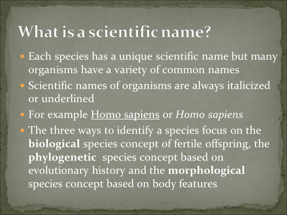 What is a scientific name