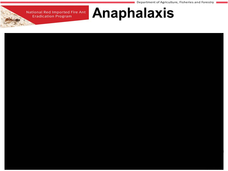 Anaphalaxis Insert link to anaphalaxis video