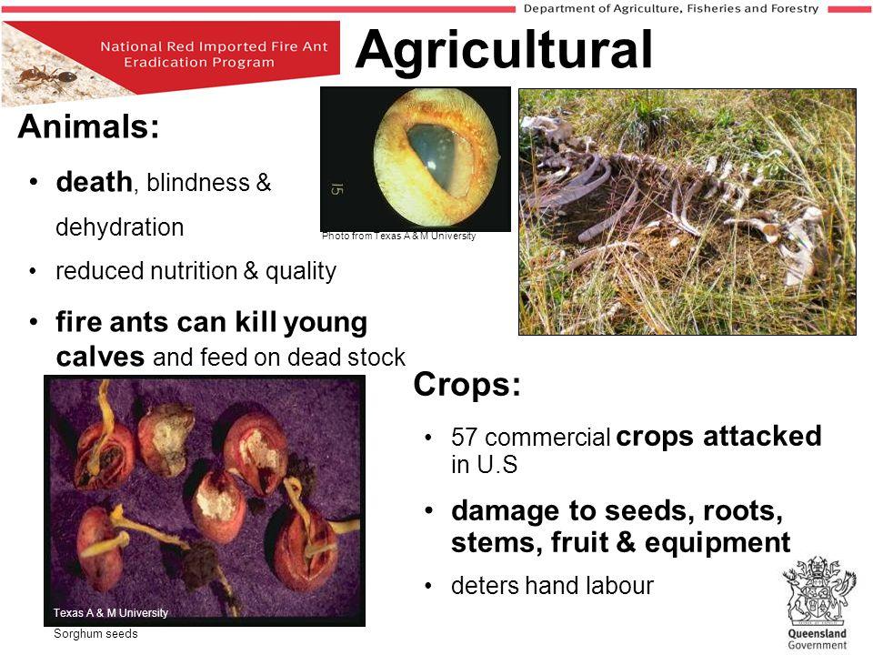 Agricultural death, blindness &