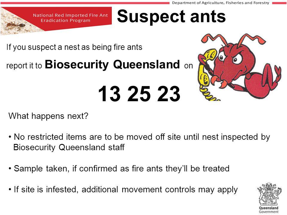Suspect ants 13 25 23 What happens next