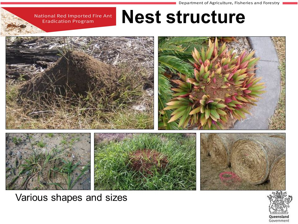 Nest structure Various shapes and sizes